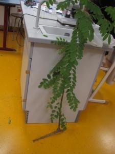 arbre utilisé pour le TP