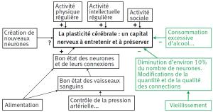 facteurs plasticité