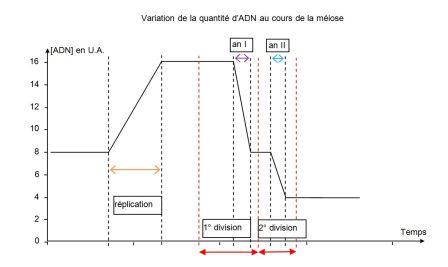 graphique quantité ADN
