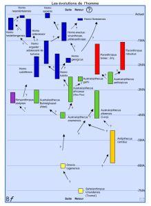 biologie en flash Homo