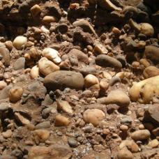 Fossile E
