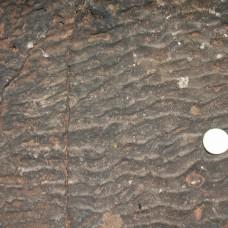 Fossile B